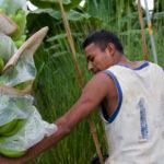 Na banánové plantážy